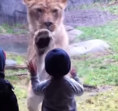incredible  fight beetween animals and babies