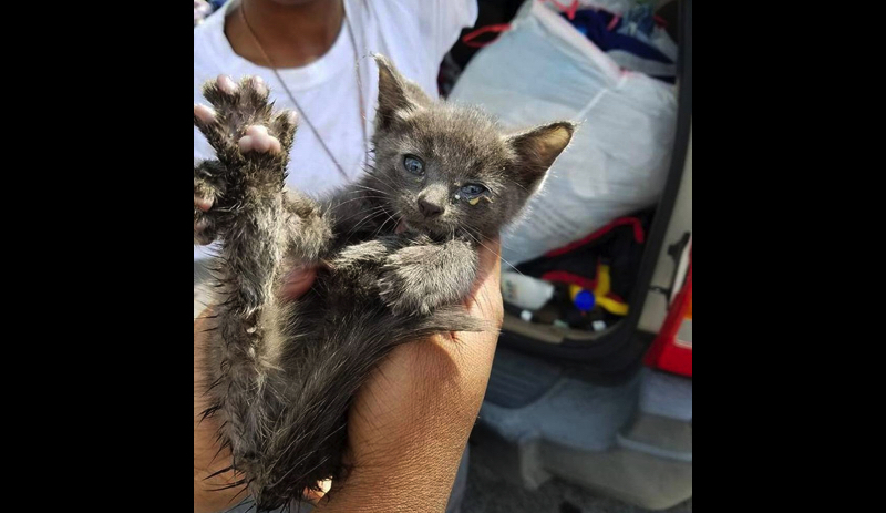 A kitten was rescued after spending two days in a drain pipe