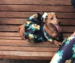 PHOTOS: Florida Teen Made A Matching Prom Dress For Her Dachshund