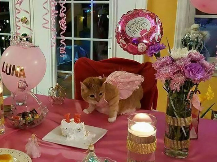 Family Throws Their Cat A Quinceañera For Her 15th Birthday (PHOTOS)