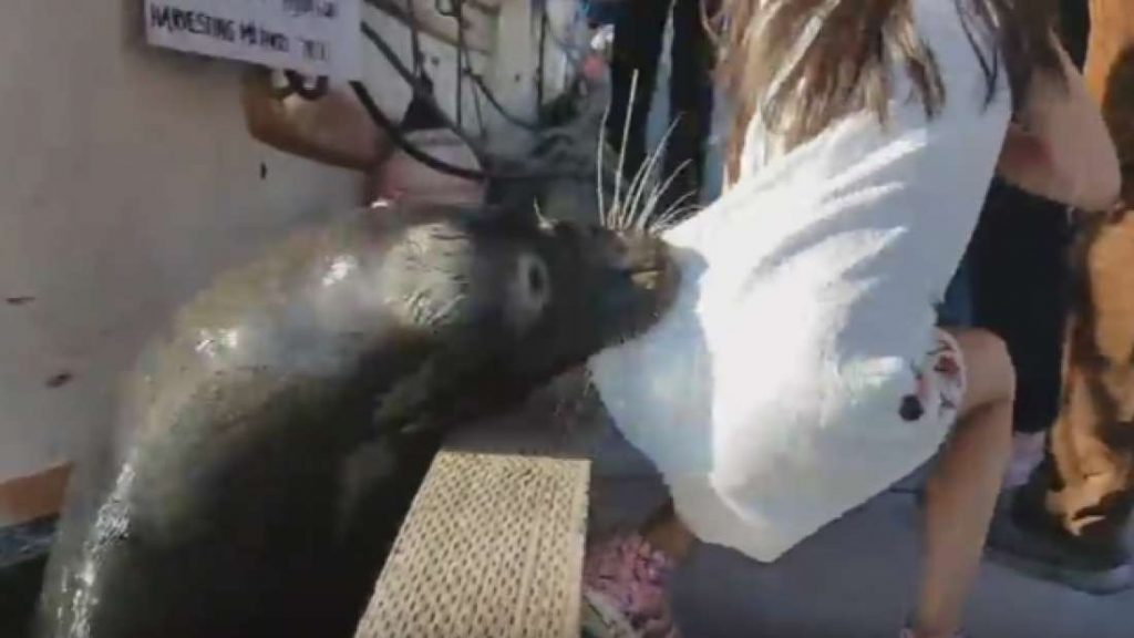 Watch as a sea lion drags a young girl into the waters at the Steveston Fisherman's Wharf (VIDEO)