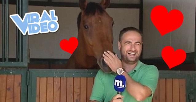 Horse Really Loves TV Reporter (VIDEO)
