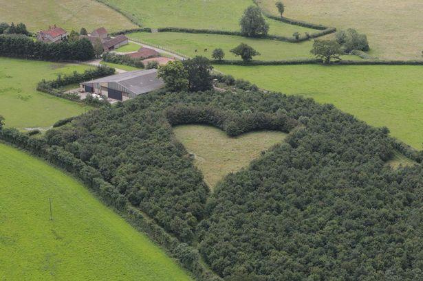 Man Plants Heart-shaped Tribute to Late Wife Using 6000 Oak Trees