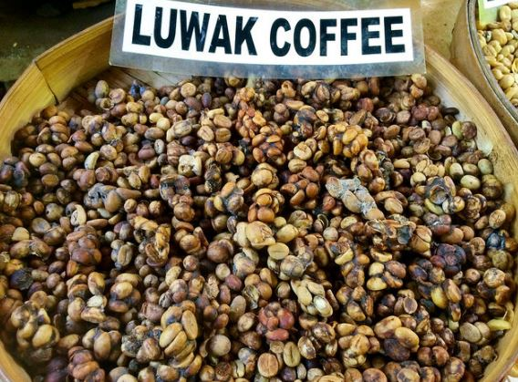 Why is Kopi Luwak so special and the most expensive coffee?