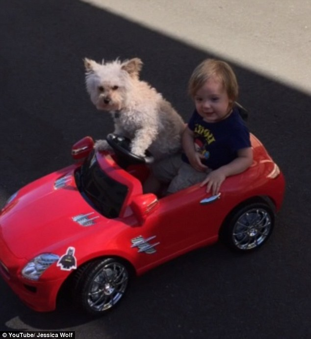 Dog drives a little boy in car…..Daisy driving Oliver-VIDEO