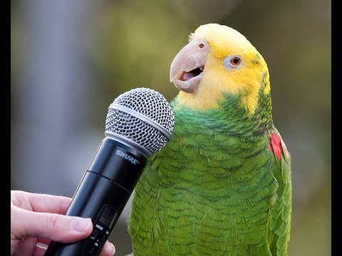 WATCH: This Parrot Sings Sia's 'Chandelier' Better Than You Can