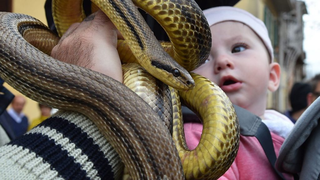 A Florida mom  intentionally  allows snake to bite her one-year-old baby