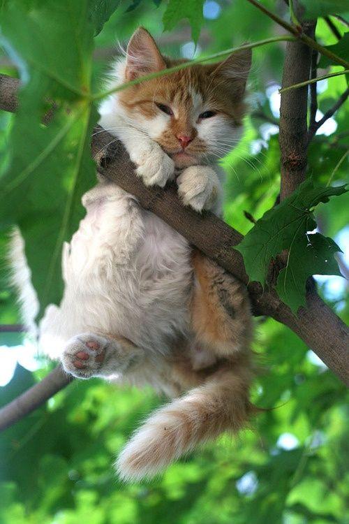 Boy Climbs 18 Feet Up A Tree To Save Kitten, Then Mom Calls 911