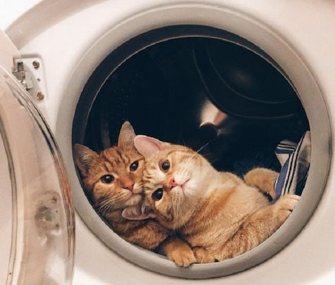Cat Dies After Little Girl Tries To Clean It In The Washing Machine