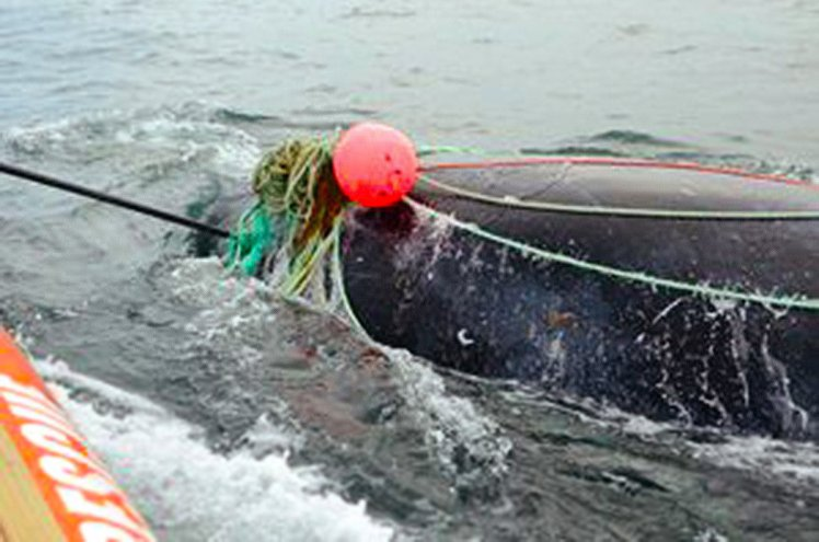Canadian Fisherman Killed By Whale Moments After Rescuing It From Fishing Nets