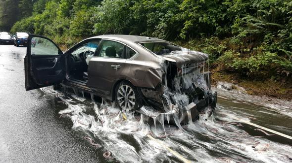 Watch -Truck Full Of Slime Eels Overturns On Oregon Highway
