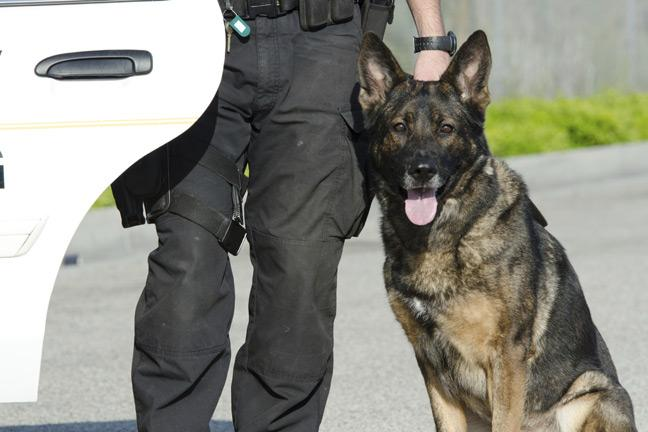 How do police dogs keep cool in the heat?