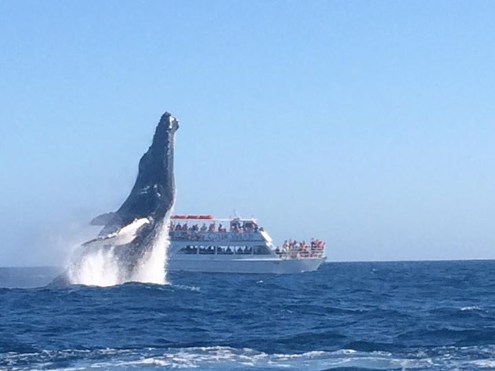 Incredible Video: 40-Ton Whale Was Just Filmed Jumping Completely Out Of The Water