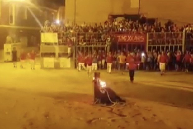 'Torturing animals is not fun, it's barbaric'. A bull died a horrible death after its horns were set on fire