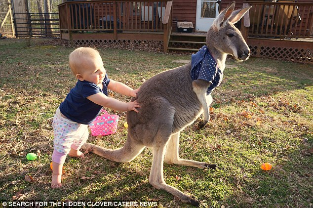 Baby and Kangaroo Are Unlikely Best Friends (VIDEO)