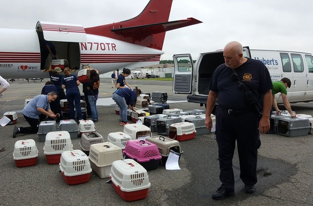 Texas Dogs Head to New Jersey in Wake of Harvey