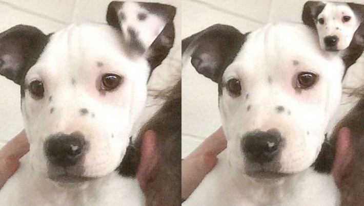 Puppy Born With A 'Selfie' On Her Ear. The Most Unique Dog We've Ever Seen