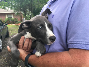 Puppy found stuffed inside backpack, left in bed of random truck in Tampa