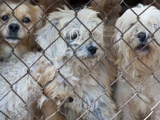California could soon require pet stores sell only rescue animals