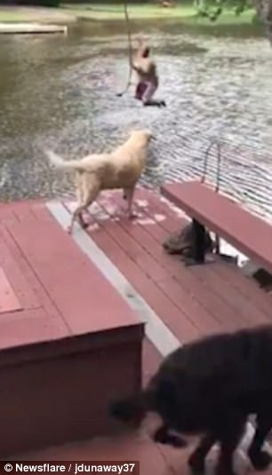 WATCH: North Carolina dogs 'rescue' owner as he plays on swing