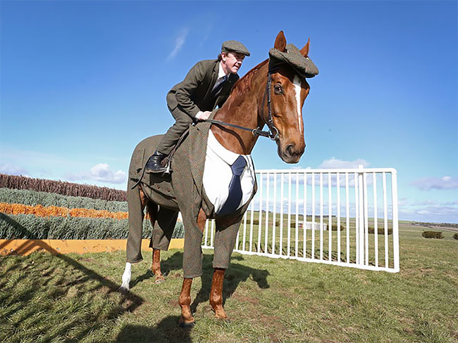 This Horse Gets Tailored Three-Piece Suit. It required over 18m (59ft) of tweed – about 10 times more than an equivalent human garment (PHOTOS)