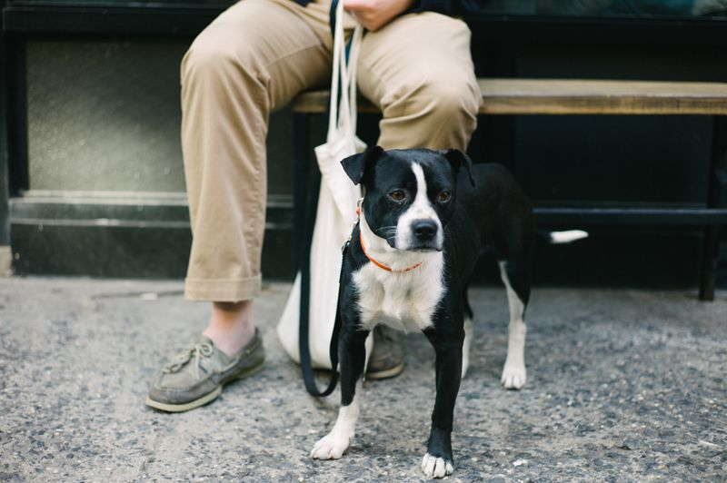 Top 10 dog-friendliest cities in the United States of America