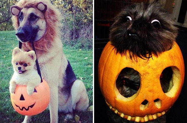 10 adorable animals who dressed up for Halloween