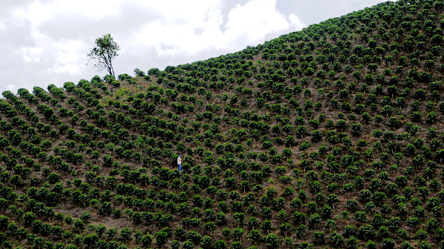Colombians have for years grown amazing coffee. Finally, they're drinking it