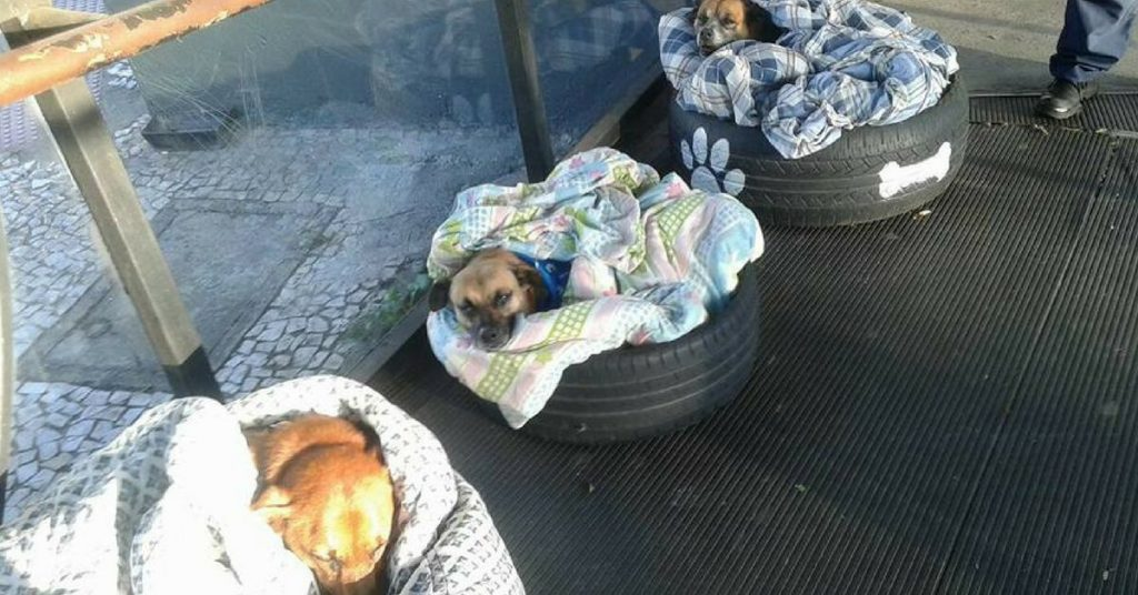 3 stray dogs have warm and cozy beds at a bus station thanks to some very kind people