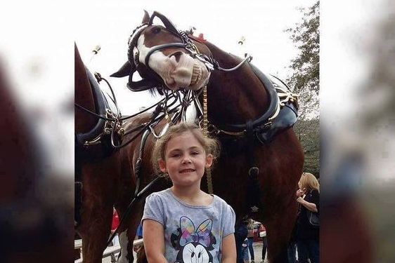 This the greatest photobomb picture from a horse that is still making everyone laugh