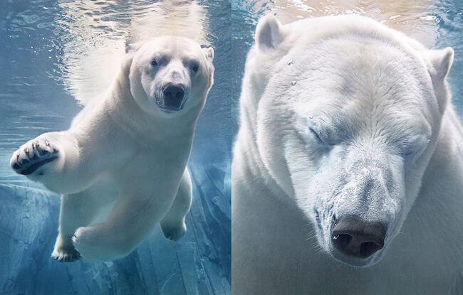 British Photographer Spends 2 Years Taking Stunning Portraits Of Endangered Animals