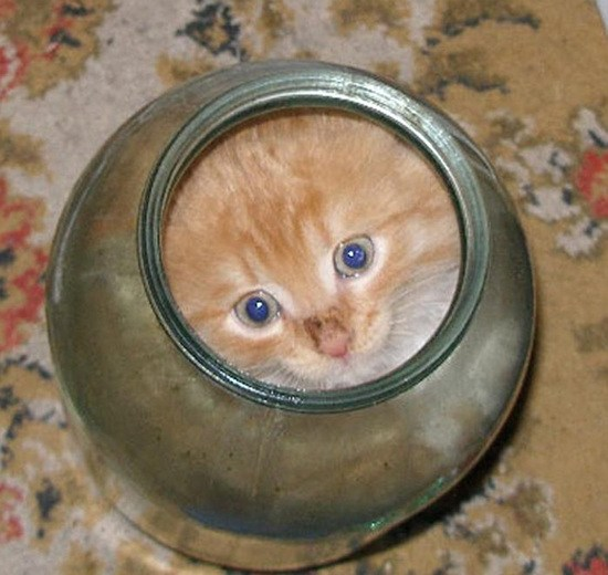 Kitten could not get out of the jar: You should watch this!