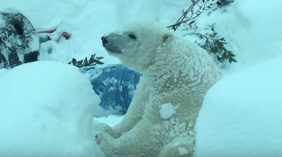 'Snow Day' at the Oregon Zoo