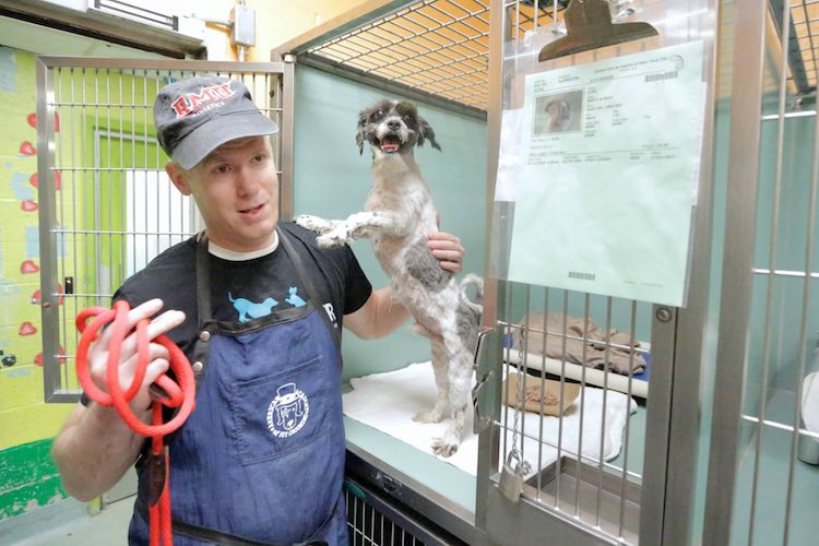New York City Groomer Gives Shelter Dogs Free Haircuts to Help Them Get Adopted