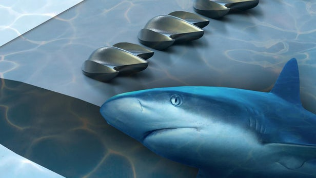 Shark skin could carry the secrets to more efficient airplanes and wind turbines