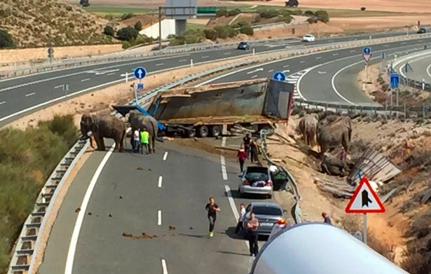 One elephant killed and two others injured after circus truck overturns on Spanish road