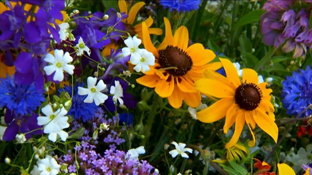London Wants to Plant Wildflowers for All 9 Million Residents