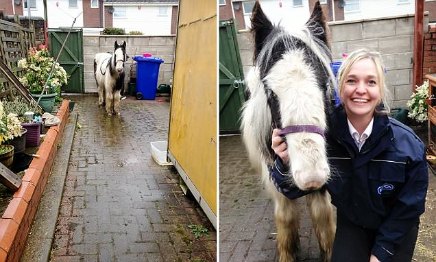 Shocked granny finds a pony dumped in her back yard