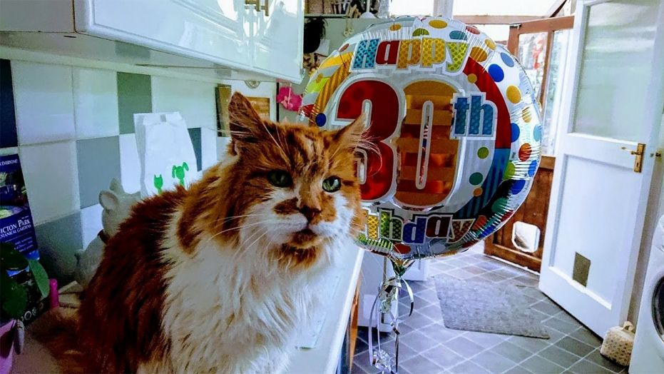 World's Oldest Cat Just Turned 30-Years-Old