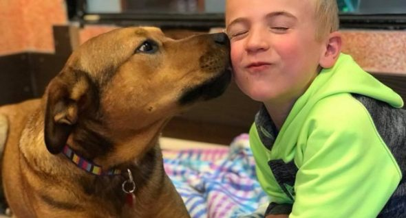 6-year-old boy helps more than 1000 dogs to find a home