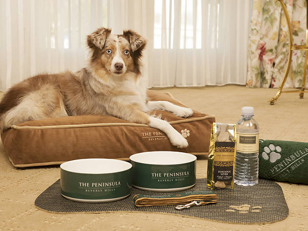 These dog-friendly hotels give your dog the best treatment