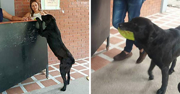 Dog  Brings A Leaf To 'Buy' Himself Treats At The Store