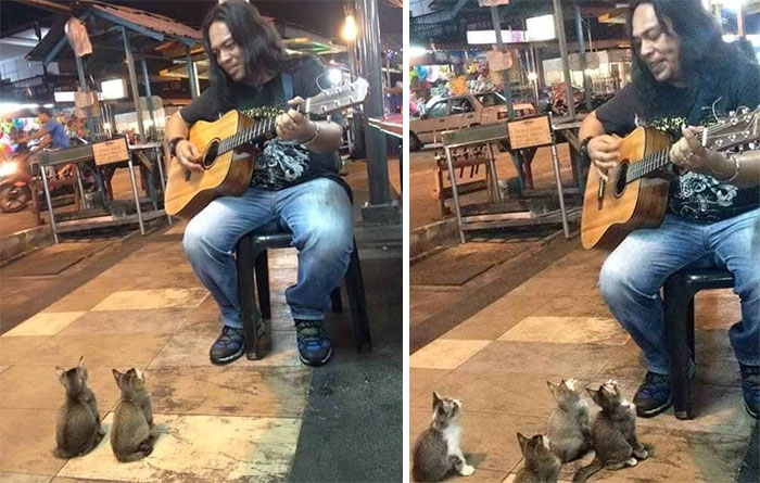 Adorable Kitties Come To Listen Street Singer That Everyone Else Ignored