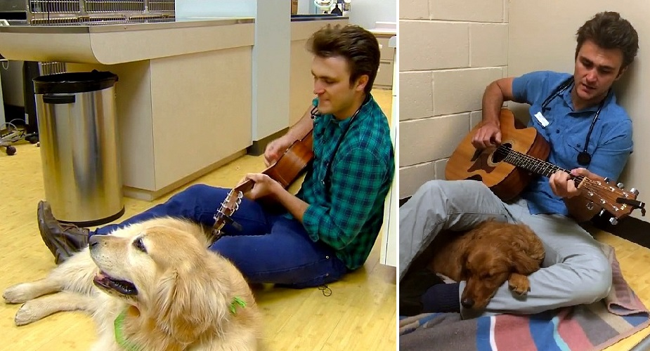 A Kindhearted Vet Sings To A Scared Dog Before Her Surgery!