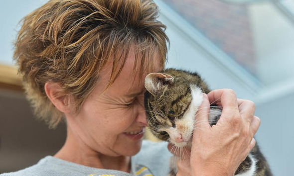 Elderly cat finally finds  its way home after going missing for an incredible 13 years