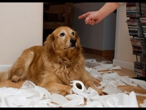 These Funny Guilty Dogs Are Very Sorry for What They've Done