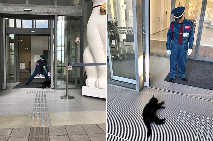 Two Art-Loving Cats Won't Give Up On Trying To Enter a Japanese Art Museum