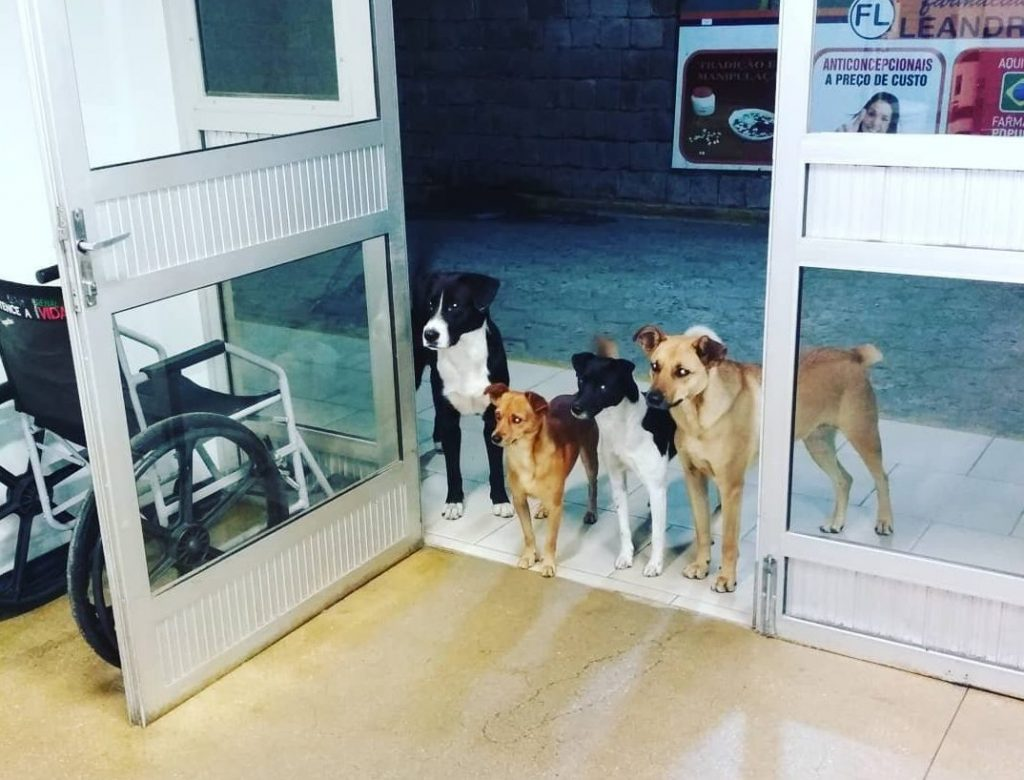 Homeless Man's Dogs Wait By Door After He Is Admitted To Hospital
