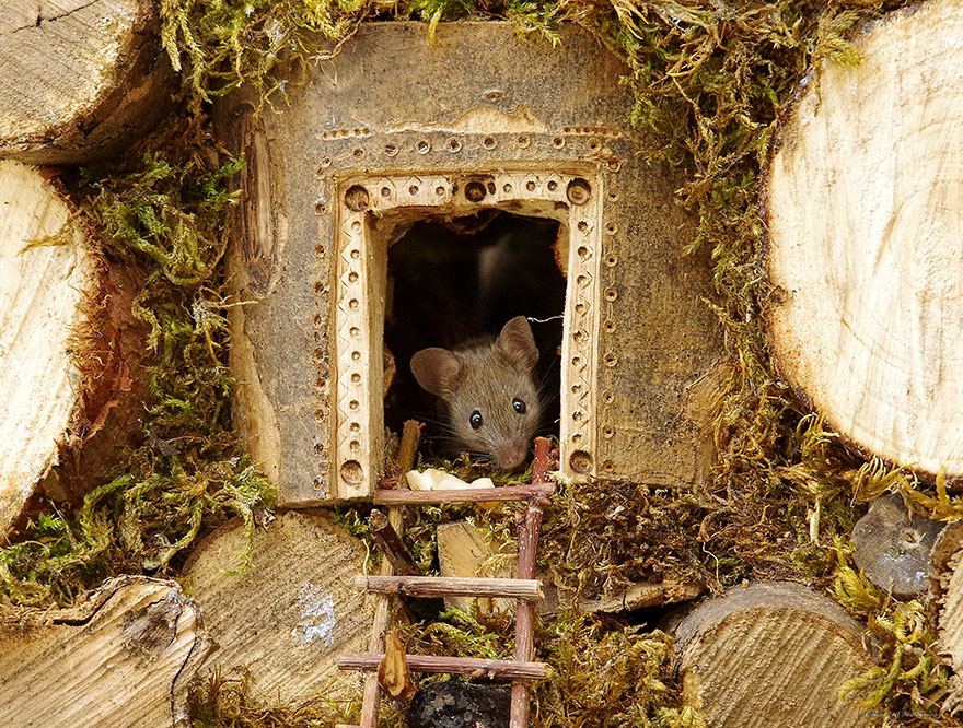 Photographer Discovers A Family Of Mice Living In His Garden, Builds a special log house for them