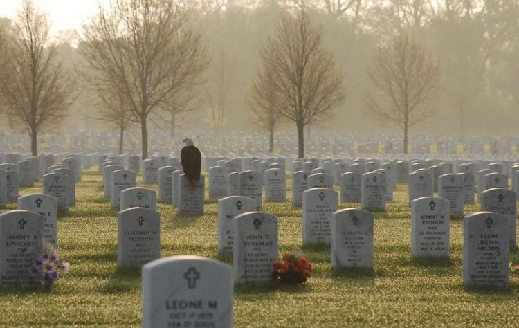Photo of Eagle on Fort Snelling Gravestone Touches Hearts, & Goes Viral